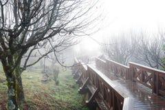 Naturbakgrund i den Alishan nationalparken, Taiwan på en våt och dimmig morgon Royaltyfri Fotografi
