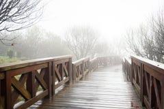 Naturbakgrund i den Alishan nationalparken, Taiwan på en våt och dimmig morgon Arkivfoto