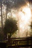 Naturbakgrund i den Alishan nationalparken, Taiwan på en våt och dimmig morgon Royaltyfria Foton