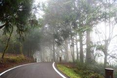 Naturbakgrund i den Alishan nationalparken, Taiwan på en våt och dimmig morgon Royaltyfri Bild