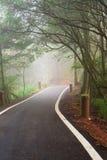 Naturbakgrund i den Alishan nationalparken, Taiwan på en våt och dimmig morgon Arkivbild