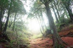 Naturbakgrund i den Alishan nationalparken, Taiwan på en våt och dimmig morgon Royaltyfria Bilder
