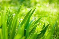 Naturbakgrund Arkivbild