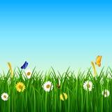 Naturbakgrund med grönt gräs, blomman och blå himmel Stock Illustrationer