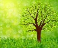 Naturbakgrund med grönt gräs och trädet Royaltyfri Foto