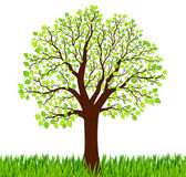 Naturbakgrund med grönt gräs och trädet Royaltyfri Fotografi