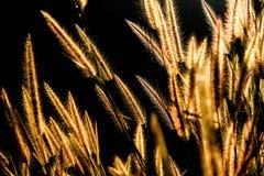 Naturbakgrund med löst gräs Arkivfoton