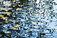 Naturbakgrund med vattenkrusningar och lönnlöv Royaltyfri Foto