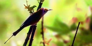 Naturbakgrund och fågel Arkivbild