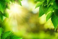 Naturbakgrund som inramas av gröna sidor Arkivbild