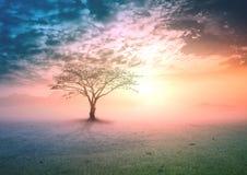 Naturbakgrundsbegrepp Royaltyfri Bild