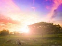 Naturbakgrundsbegrepp: Ensamt träd på ängsolnedgång arkivfoto