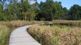 Naturbana Royaltyfri Foto