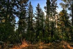 Naturbaum-Sonnenwald hoch lizenzfreie stockfotos