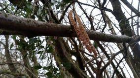 Naturbaumabschluß oben stockfotos