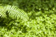 Naturbegreppsbakgrund av gräsplanträdgården Royaltyfria Bilder