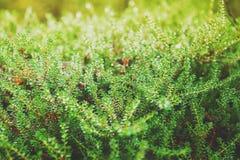 Naturbegreppsbakgrund med textur för grön växt Fotografering för Bildbyråer