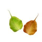 Naturblätter Stockbild