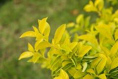 Naturblätter Stockfoto