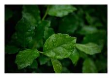 Naturblad Royaltyfria Foton