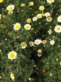 Naturblommor 1 Arkivfoton