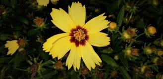 Naturblommor 003 Fotografering för Bildbyråer