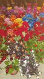 naturblommor Royaltyfria Bilder