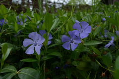 Naturblume Lizenzfreie Stockfotografie