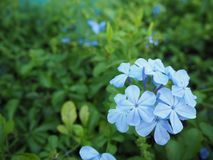 Naturblumen-Frischehintergrund Lizenzfreie Stockfotografie