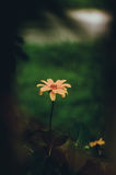 Naturblumenhintergrund Erstaunliche natürliche Ansicht von gelben Tulpen unter Sonnenlicht im Garten Schöne Landschaft der Perspe Lizenzfreie Stockfotografie