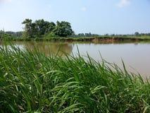 Naturbygräs nära floden av Sri Lanka arkivbild