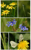 Naturcollage Stockbild