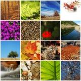 Naturcollage Stockbild