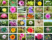 Naturcollage Stockfoto