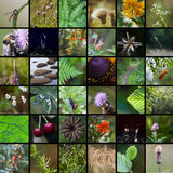 Naturcollage Royaltyfri Fotografi