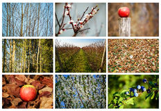 Naturcollage Arkivfoton