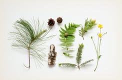 Naturdetails - Baumrinde, Kegel, Sumpfringelblumenblume, Kieferniederlassungen und Farn treiben Blätter Stockbild