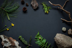 Naturdetails - Steine, Baumrinde, Kegel, Sumpfringelblumenblume, Kieferniederlassungen und Farn treiben Blätter Stockbilder