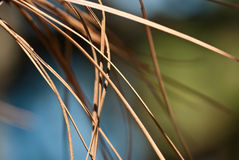 Nature�s Abstract � Dried Pine Needles Royalty Free Stock Photos