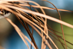 Nature's Abstract – Dried Pine Needles Stock Photos