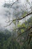 Nature湖射击了在Gleinkersee在奥地利 免版税图库摄影