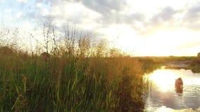 Nature湖河和草在日落阳光 狗在水steadicam射击运动视频洗涤 免版税图库摄影