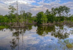 Nature湖Bagan Datoh霹雳州马来西亚 图库摄影