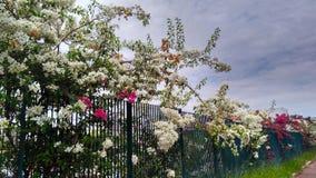Nature à la ville Photographie stock libre de droits
