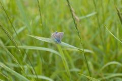 Nature ústà animal NAD Labem de papillon Images stock