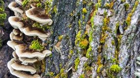 nature Été Photos stock