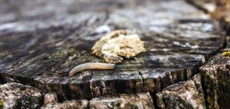 nature Été Photo libre de droits
