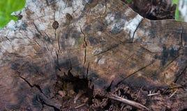 nature Été Photographie stock libre de droits