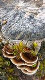 nature Été Photo stock