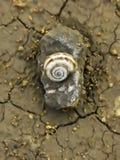 Nature éternelle Image libre de droits
